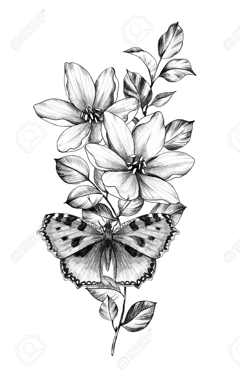 Realistic Pencil Drawings Of Flowers And Butterflies