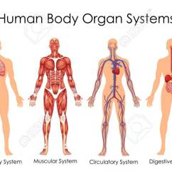 medical education chart of biology for human body organ system diagram of the body system diagram of the body system [ 1300 x 675 Pixel ]