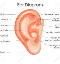 medical education chart of biology for human ear diagram vector illustration stock vector 79651717 [ 1300 x 1299 Pixel ]