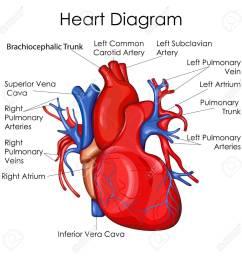 medical education chart of biology for heart diagram vector illustration stock vector 79651874 [ 1300 x 1300 Pixel ]