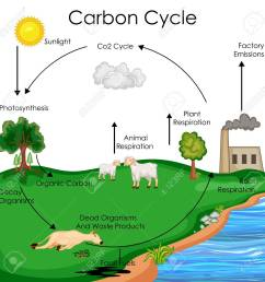 carbon cycle diagram [ 1300 x 1300 Pixel ]