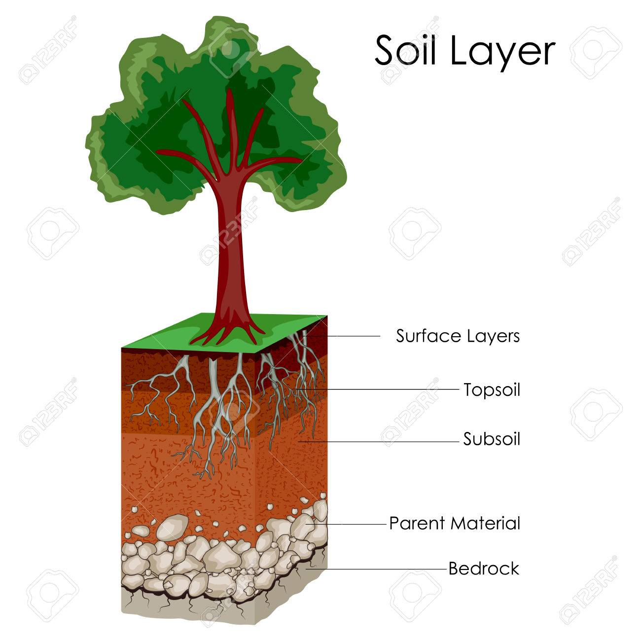 hight resolution of education chart of science for layers of soil diagram stock vector 80712774