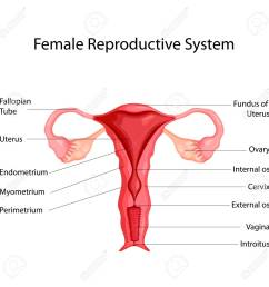 education chart of biology for female reproductive system diagram vector illustration stock vector 98443438 [ 1300 x 1300 Pixel ]