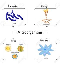 education chart of biology for types of microorganism diagram stock photo 98923775 [ 1300 x 1300 Pixel ]