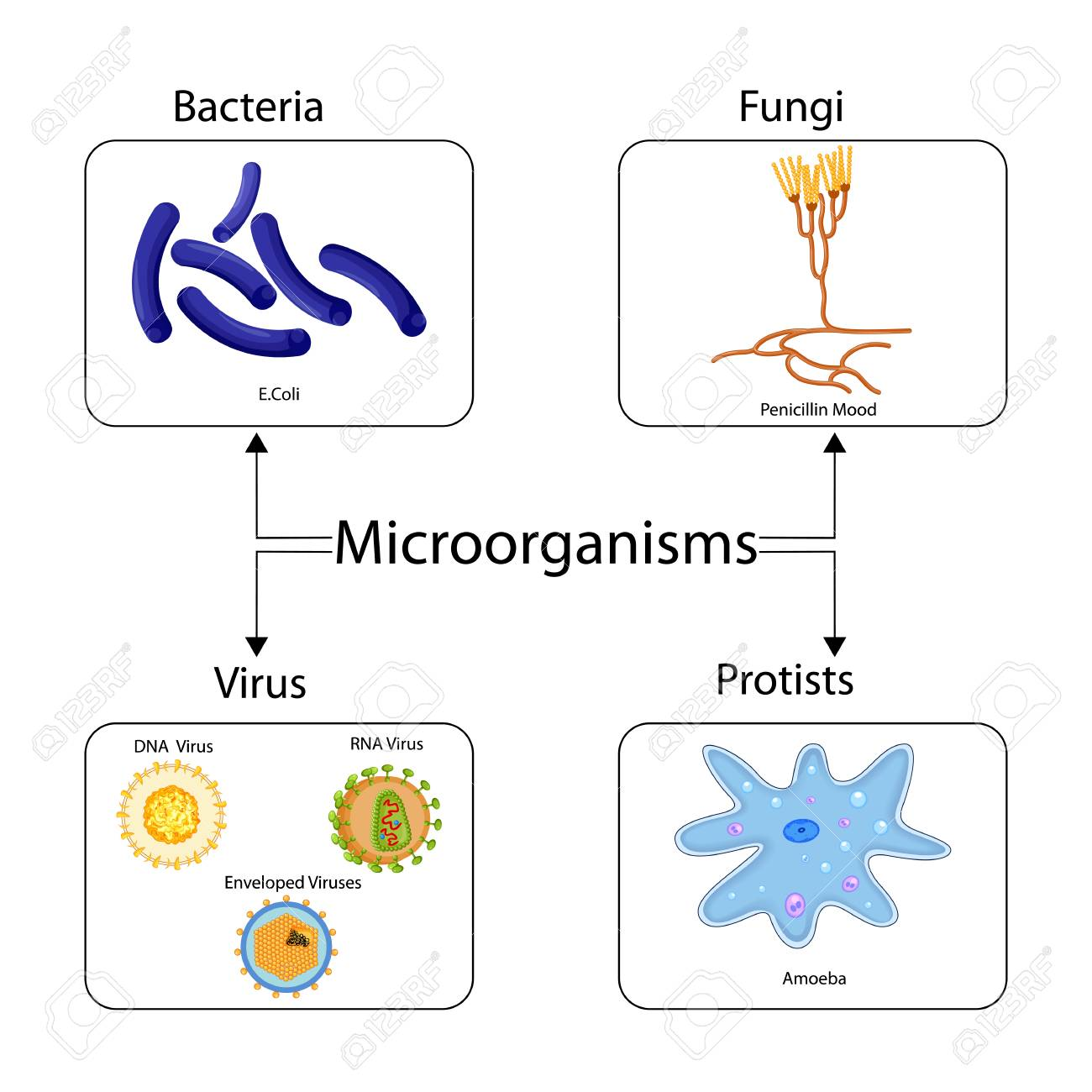 hight resolution of education chart of biology for types of microorganism diagram stock photo 98923775