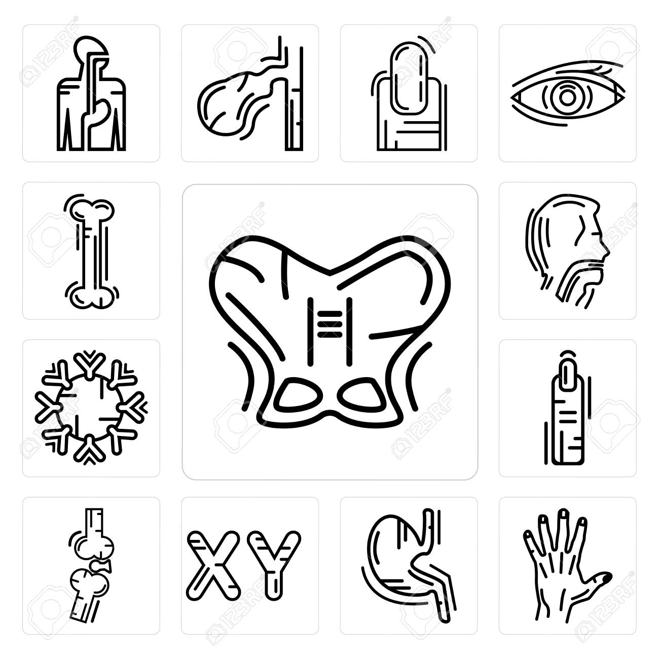 Chromosome Set Set Of 13 Simple Editable Icons Such As Human Hip Men Hand