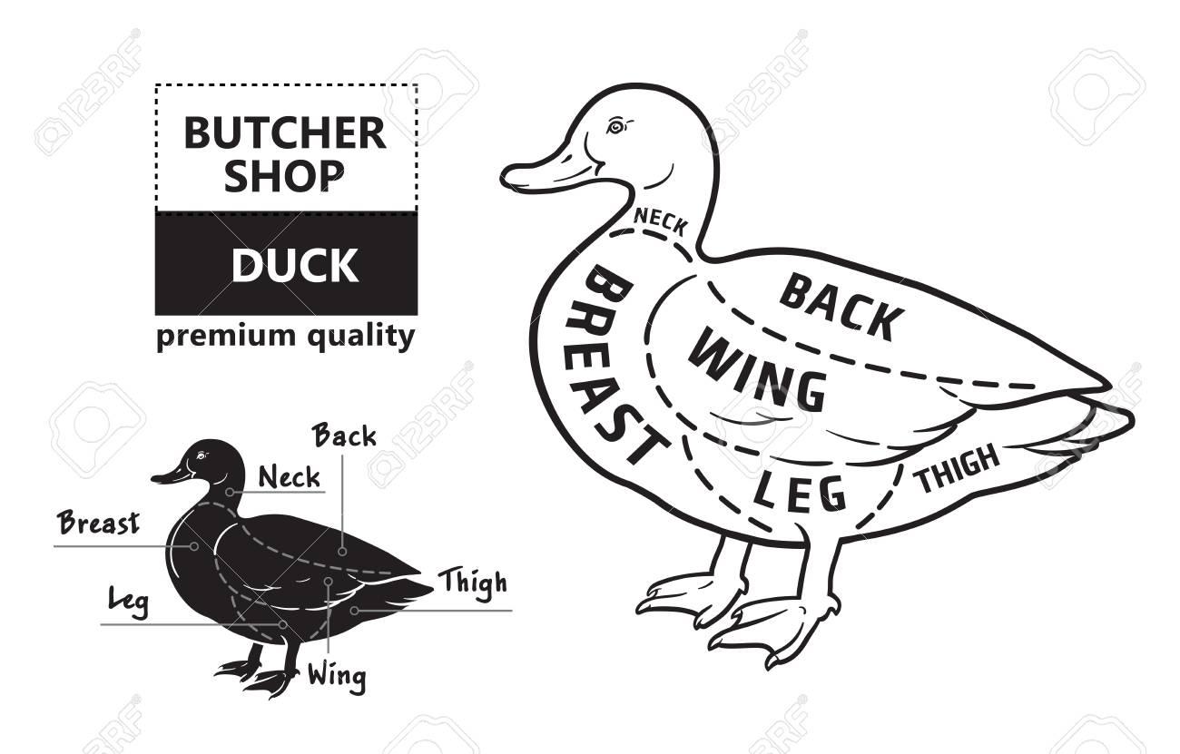 duck wing diagram jcb 4cx wiring typographic butcher cuts scheme premium guide meat label stock vector 99055255