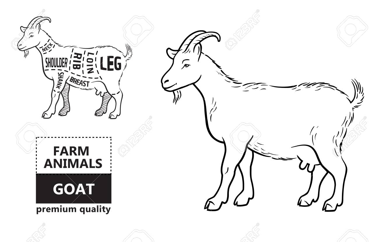 hight resolution of diagram of goat wiring diagram yer diagram of goat with label diagram of goat