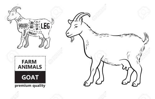 small resolution of diagram of goat wiring diagram yer diagram of goat with label diagram of goat
