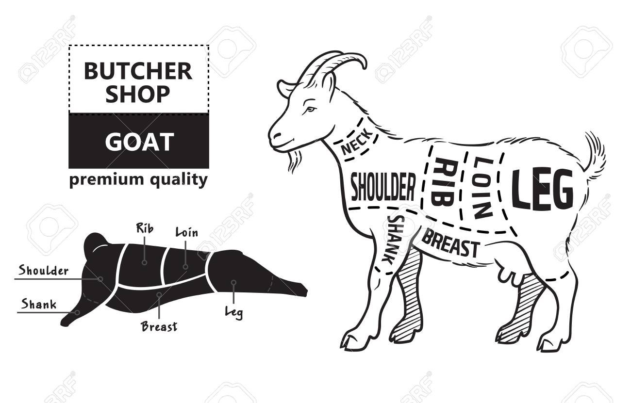 hight resolution of vector illustration goat cuts diagram or chart goat black diagram of goat liver diagram of goat