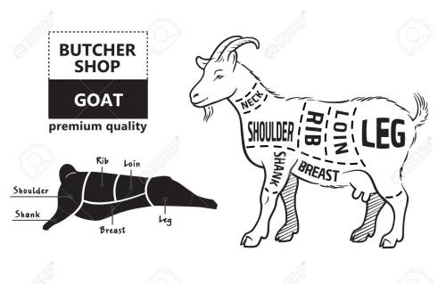 small resolution of vector illustration goat cuts diagram or chart goat black diagram of goat liver diagram of goat
