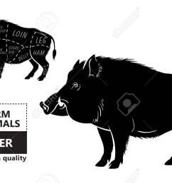 wild hog boar game meat cut diagram scheme royalty free cliparts vector wild hog  [ 1300 x 831 Pixel ]