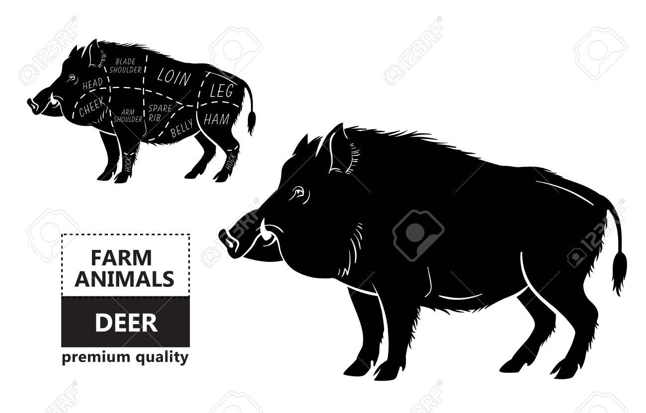 hight resolution of wild hog boar game meat cut diagram scheme royalty free cliparts vector wild hog