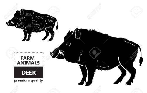 small resolution of wild hog boar game meat cut diagram scheme royalty free cliparts vector wild hog