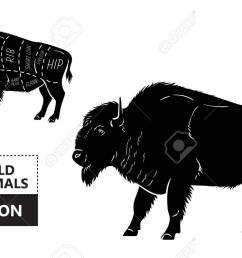 body diagram of bison wiring diagram database body diagram of bison [ 1300 x 831 Pixel ]