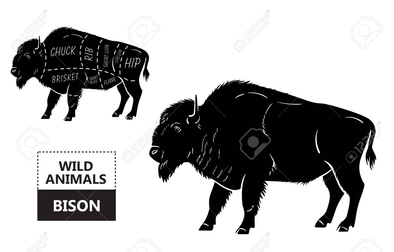 hight resolution of body diagram of bison wiring diagram database body diagram of bison
