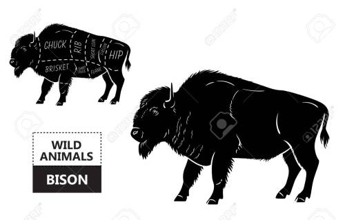 small resolution of body diagram of bison wiring diagram database body diagram of bison