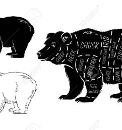 cut of bear set poster butcher diagram bear vintage typographic diagram of a teddy bear diagram of a bear [ 1300 x 831 Pixel ]