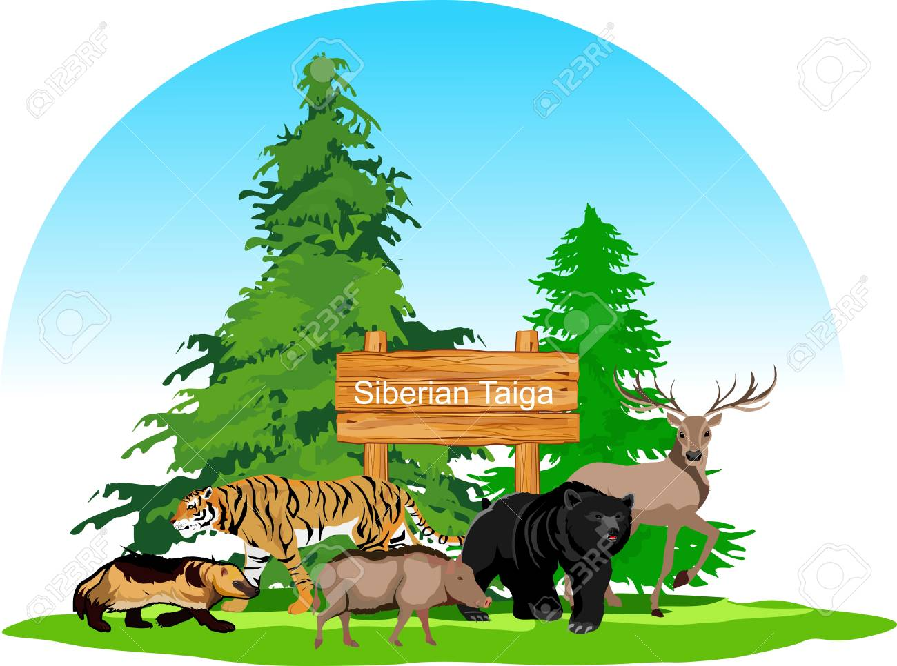 Discover animals that live in the boreal forest habitat. Siberian Taiga Forest Animals Concept Royalty Free Cliparts Vectors And Stock Illustration Image 115947607