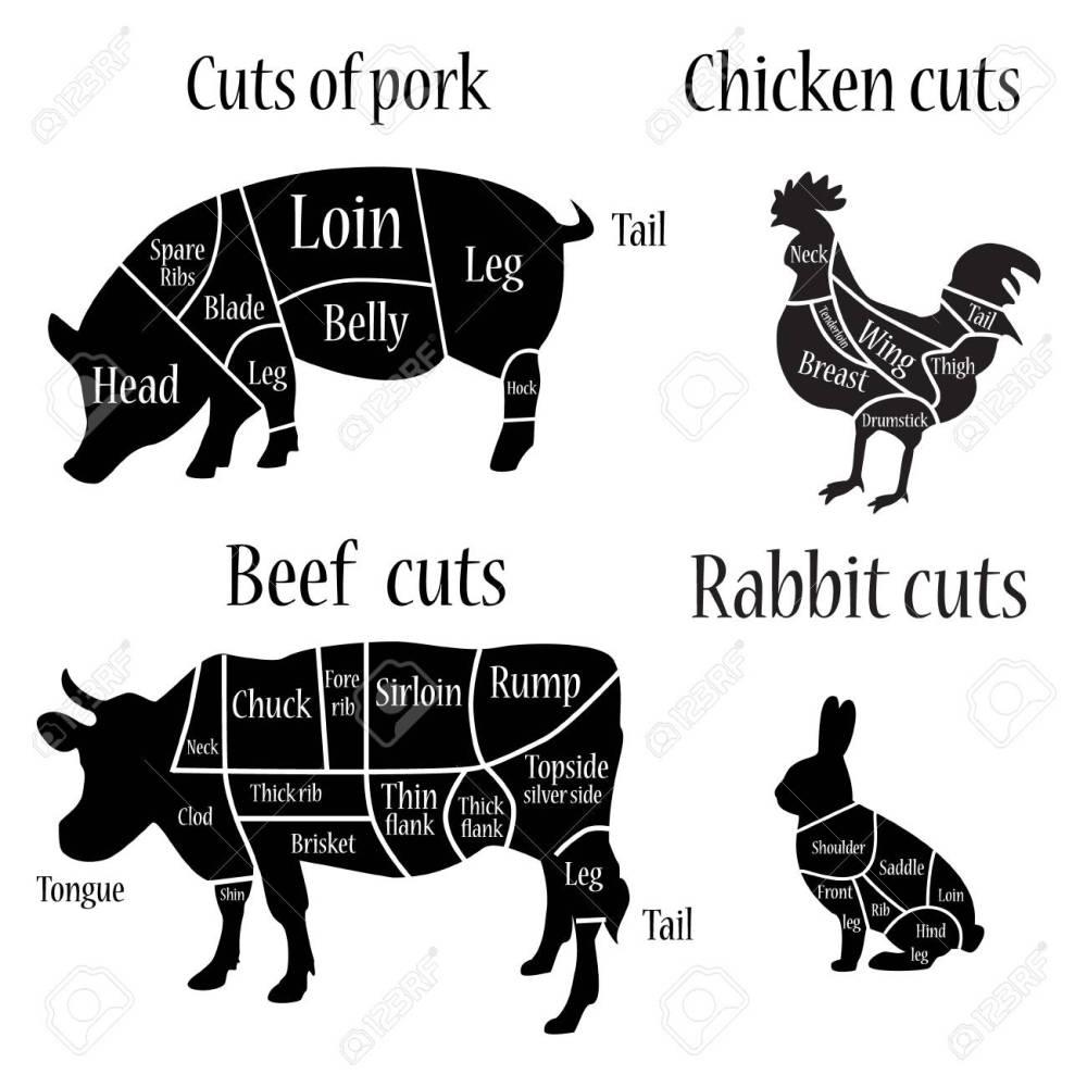 medium resolution of vector illustration chicken rabbit cow and pork cuts diagram