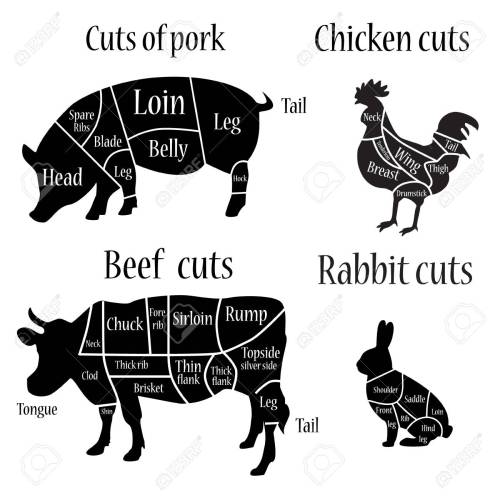 small resolution of vector illustration chicken rabbit cow and pork cuts diagram