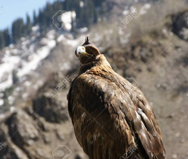 Brown Hunting Eagle In Almaty In The Mountains Of Medeo Eye Mask Stock Photo 109335877