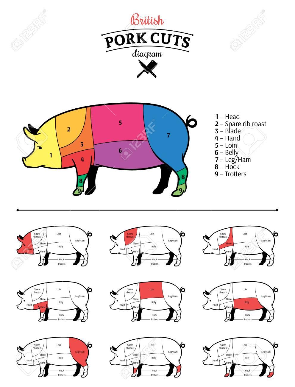 hight resolution of british pork cuts diagram stock vector 115010725