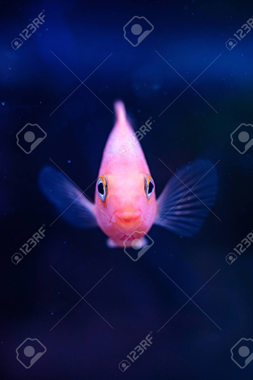 Fish Front View : front, Portrait, Mouth, Background, Selective.., Stock, Photo,, Picture, Royalty, Image., Image, 138290744.