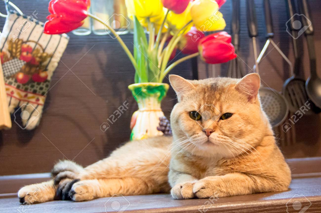cats in the kitchen island lighting cat on background of multi colored tulips stock photo 58905315