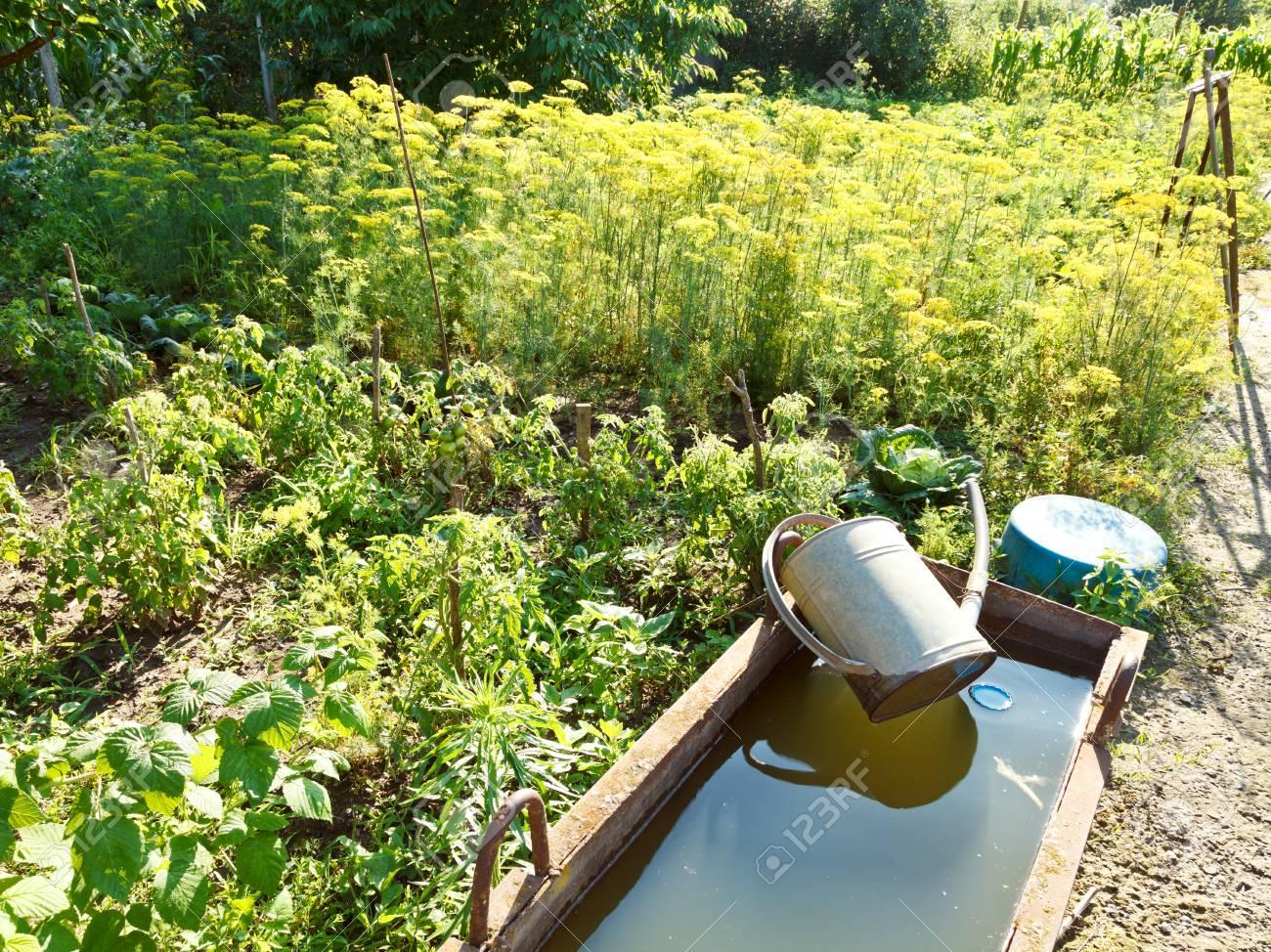 bassin avec de l eau pour arroser le jardin et douchette dans le jardin en ete banque d images et photos libres de droits image 30784068