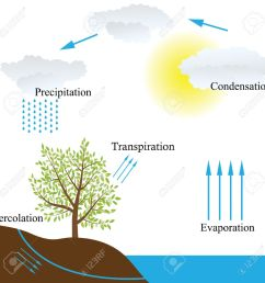 vector vector schematic representation of the water cycle in nature [ 1300 x 1300 Pixel ]