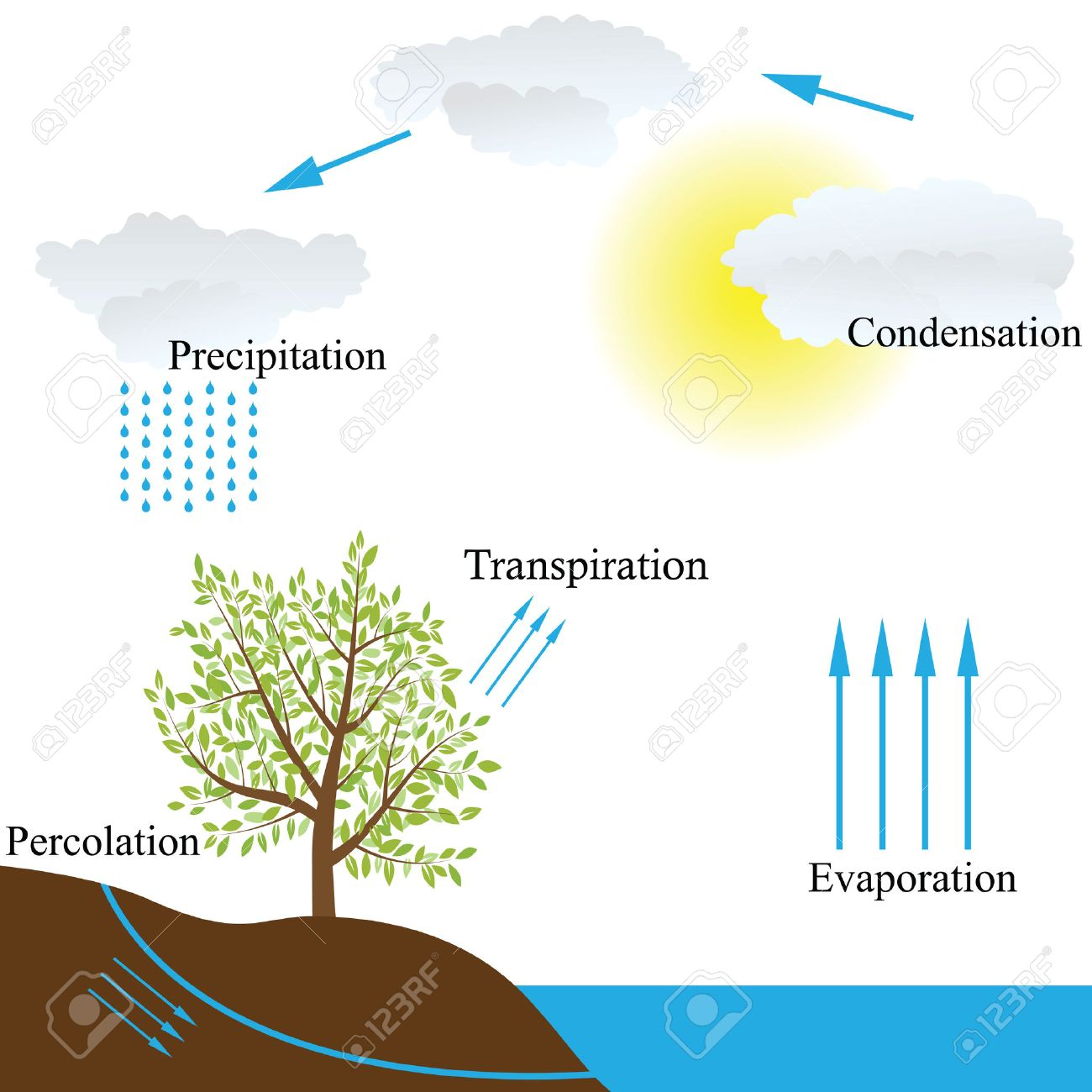 hight resolution of vector vector schematic representation of the water cycle in nature
