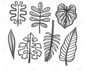 how to draw tropical plants