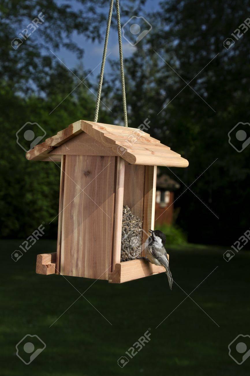 banque d images mesange a tete noire sur une mangeoire pour les oiseaux a bec grand ouvert regardant les graines
