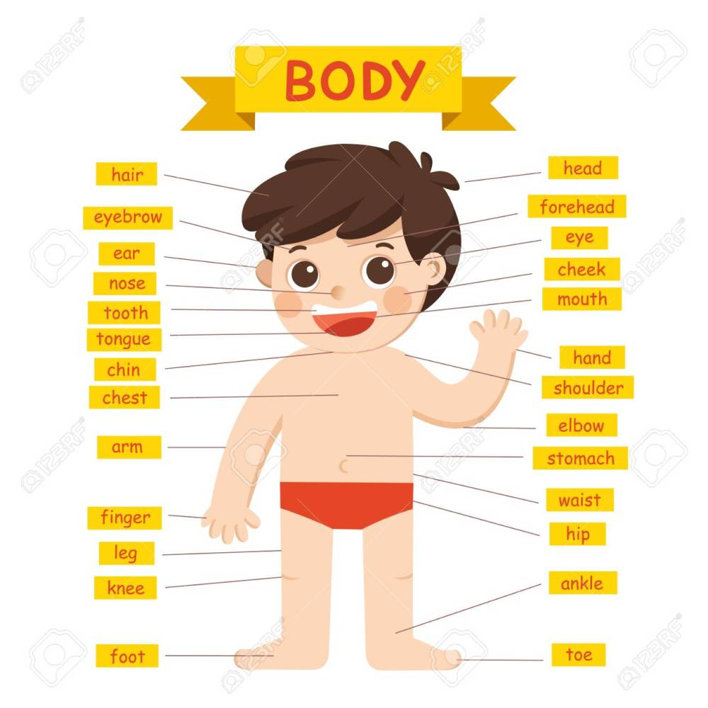 medium resolution of illustration of boy body parts diagram royalty free cliparts labeled diagram of parts of the body diagram of parts of body