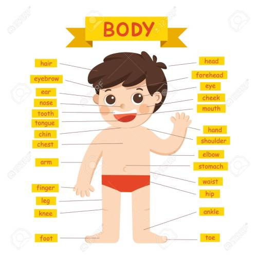 small resolution of illustration of boy body parts diagram royalty free cliparts labeled diagram of parts of the body diagram of parts of body