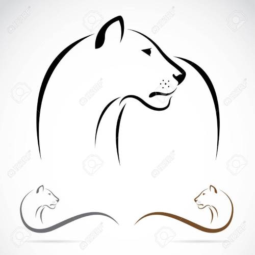 small resolution of lion on white background lioness clipart black and white