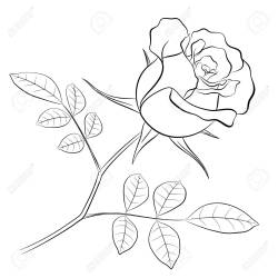 Black Outline Of A Rose Flower With A Stem And Two Leaves On Royalty Free Cliparts Vectors And Stock Illustration Image 93241783