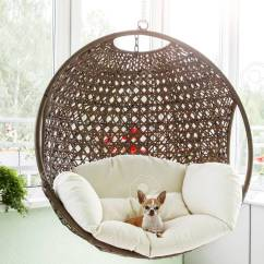 Hanging Rattan Chair Folding Covers Cute Toy Terrier Resting In A On The Balcony Of Apartment