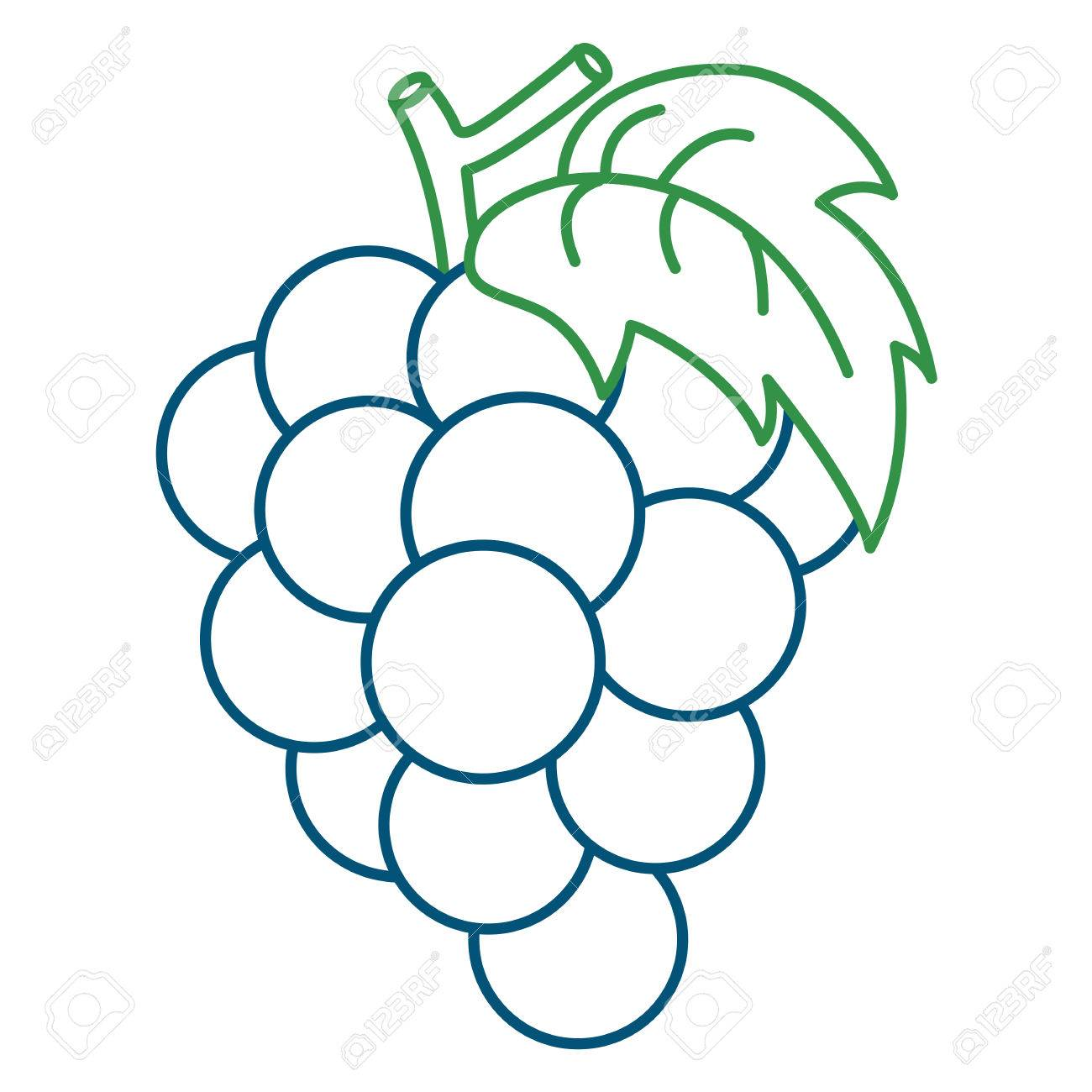 Coloring Page Illustration Of Grape Royalty Free Cliparts Vectors