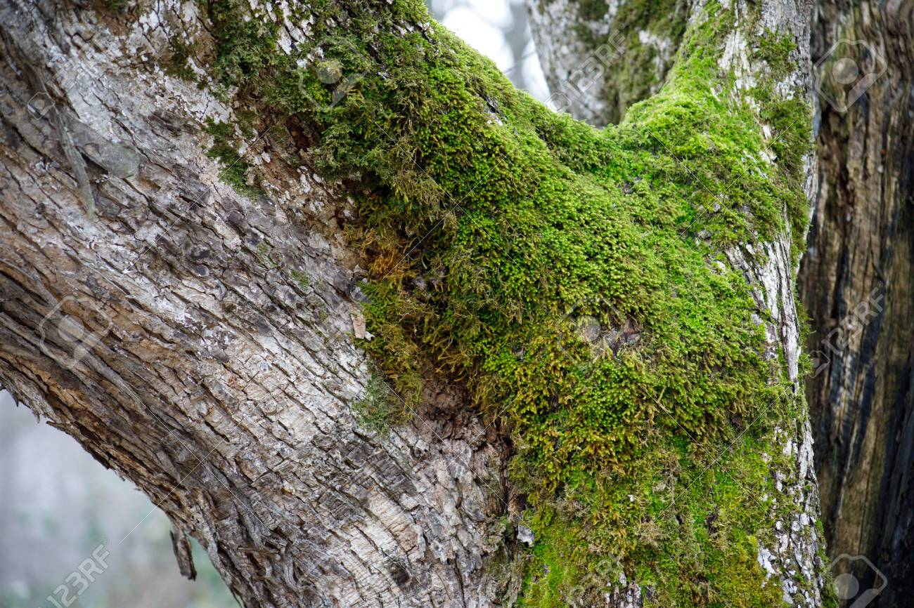 tree with moss on