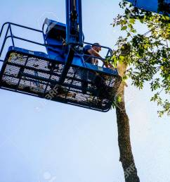 man on aerial lift cutting tree with chainsaw stock photo 72293386 [ 1300 x 866 Pixel ]