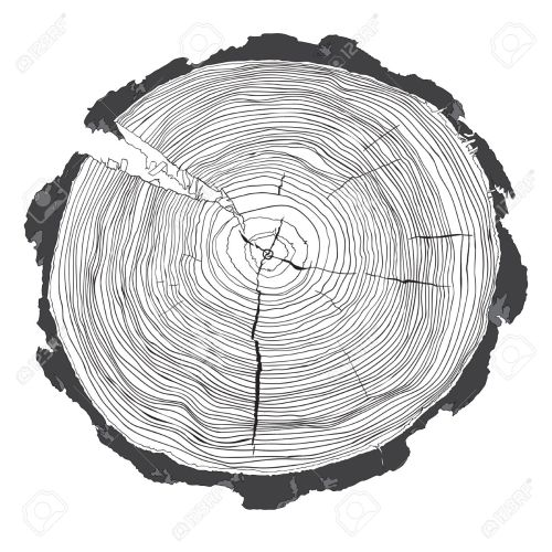 small resolution of annual tree growth rings with grayscale drawing of the cross section of a tree trunk