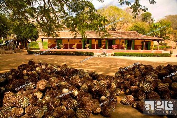 Image result for La Noria sinaloa