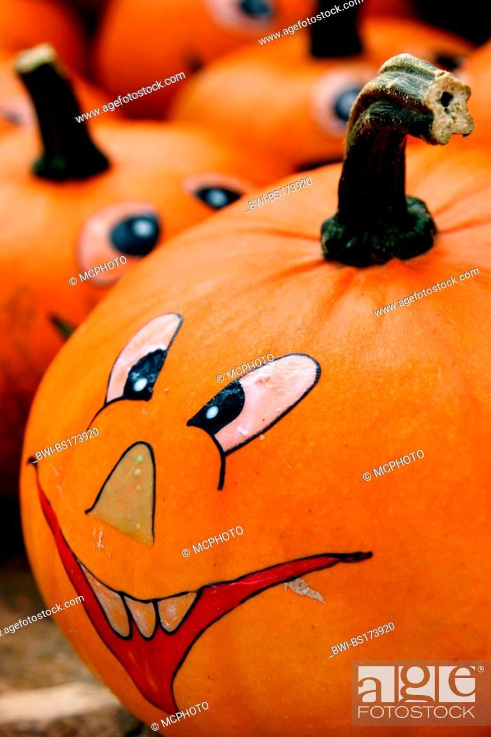 marrow field pumpkin cucurbita