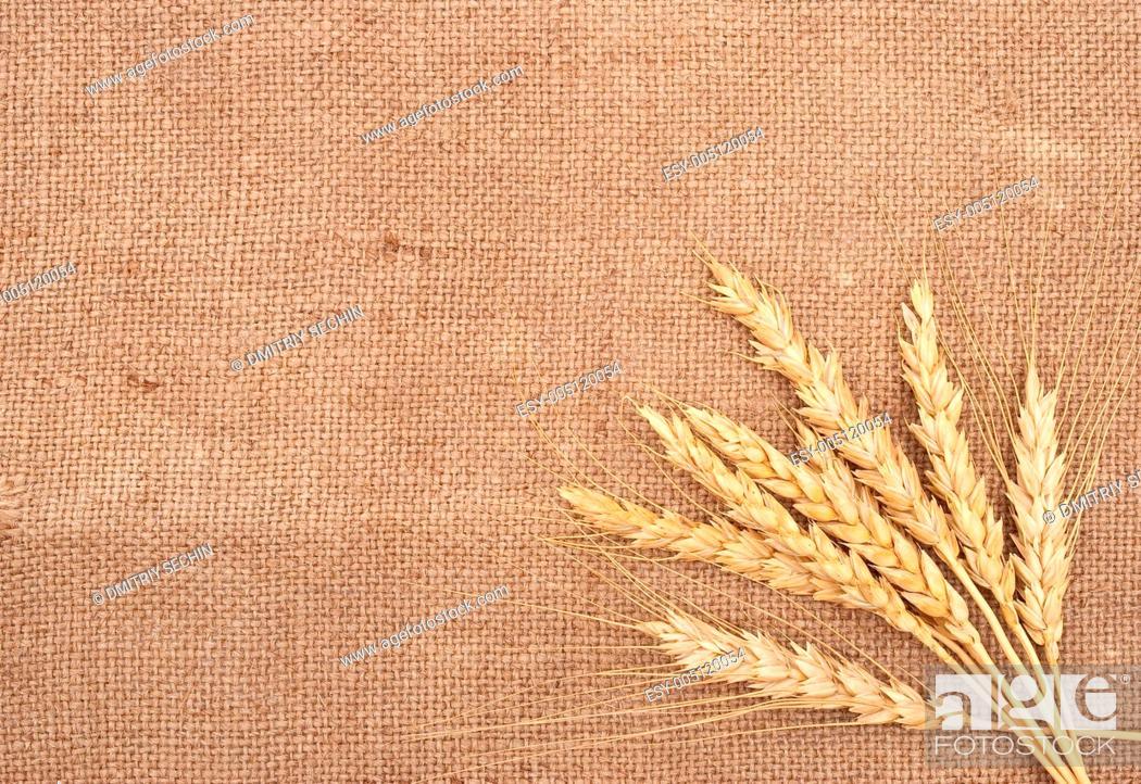 wheat ears on burlap