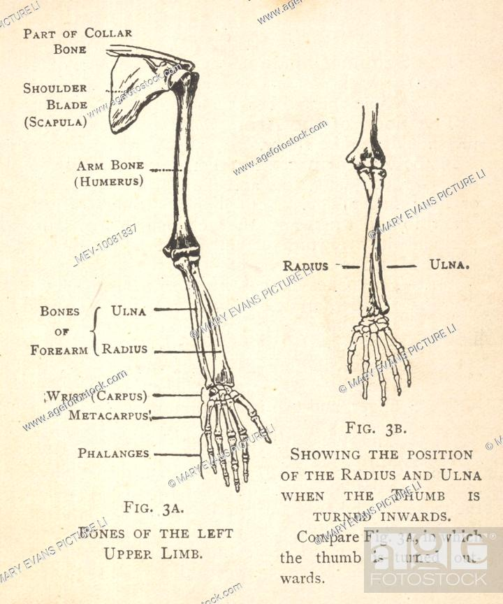 veins in the foot diagram sense of smell left arm wiring all data diagrams bones and hand showing position deep