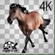 Realistic Horse Running
