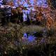 Quaking Aspen 0 - Beaver 1