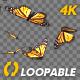 Butterfly Swarm - American Monarch